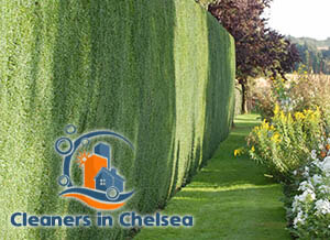 Hedge Maintenance Chelsea